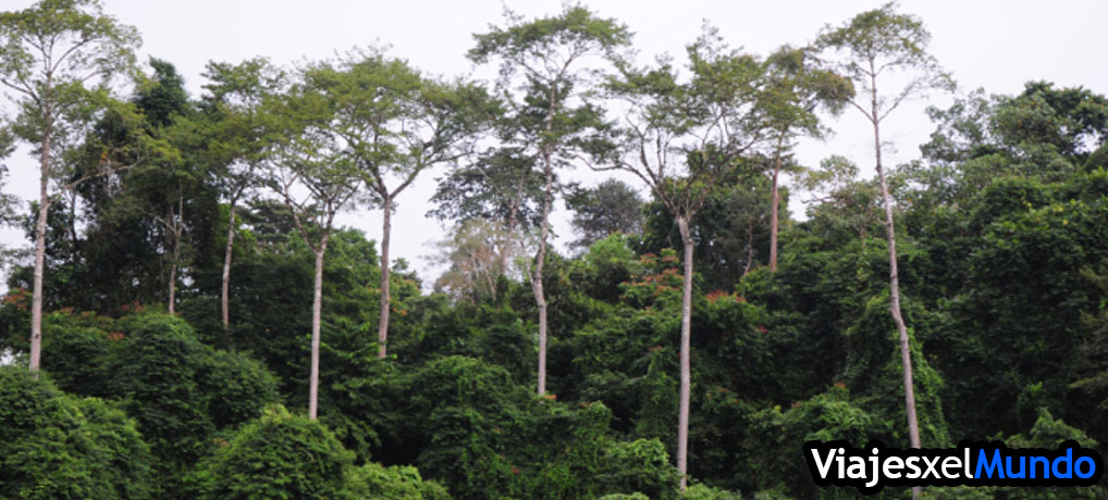 taman-negara-malasia-viajesporelmundo