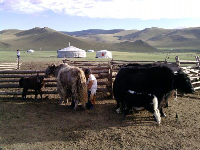rp_viajes_a_asia_mongolia-14.jpg