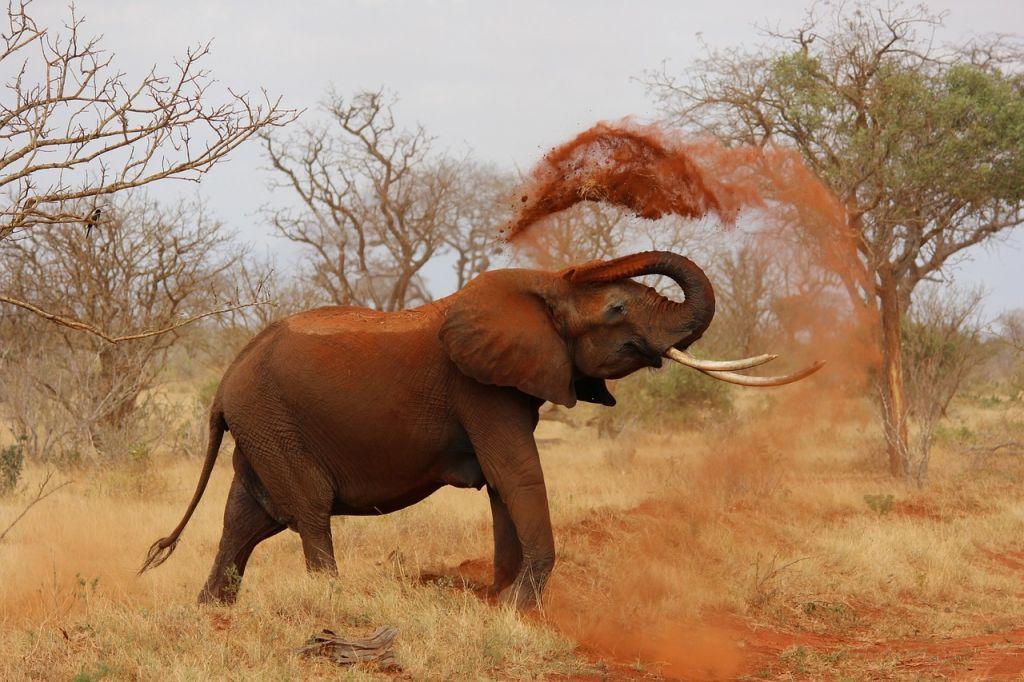 qué hacer en kenia