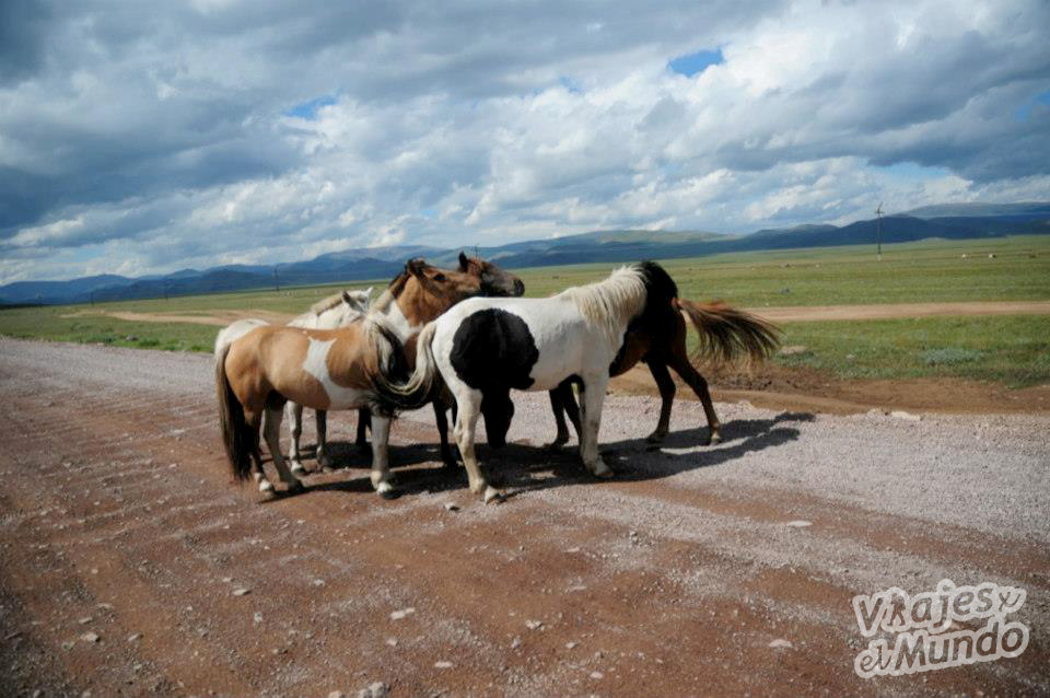caballos mongolia 2