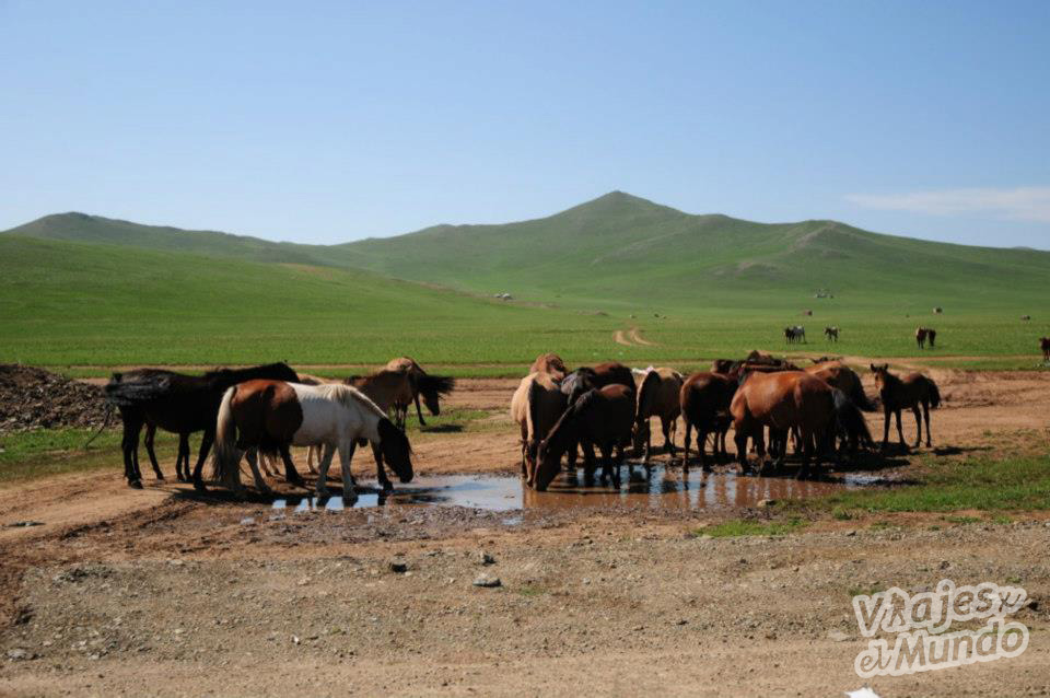 caballos-mongolia