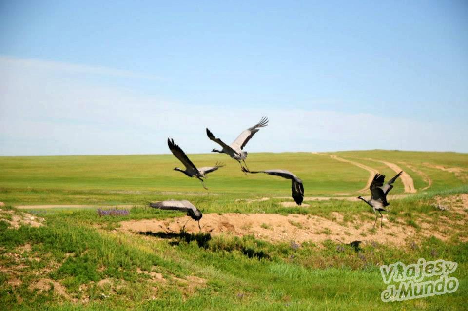 naturaleza mongolia