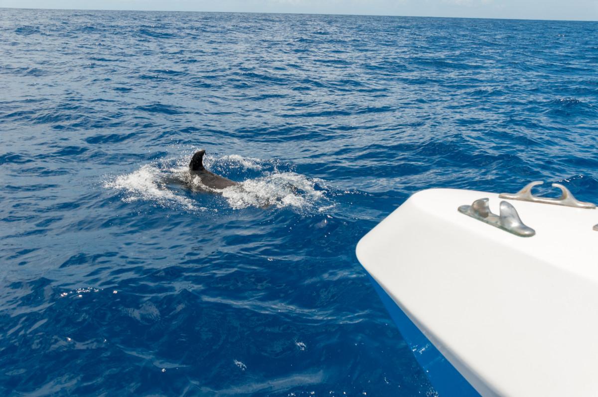 delfines y ballenas en La Palma